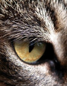 A close-up of a cat's eye