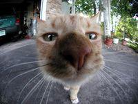 A cat using its senses for exploration
