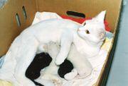 Four kittens being nursed